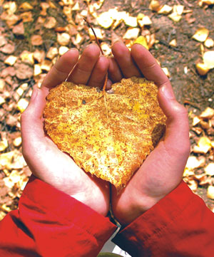 heart shaped autumn leaves - dont rush into love